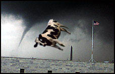 th 77709 tornadocow 122 1074lo