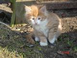 Фотки красивых кошек, котов и котят